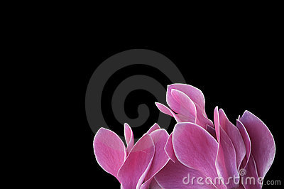 Flowers with space