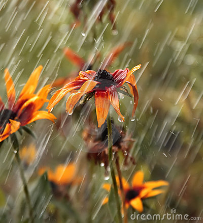 Flowers during a summer rain