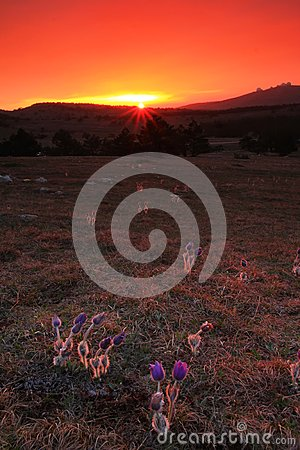 Flowers At Sunset Royalty Free Stock Photography - Image: 19451477