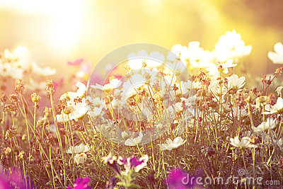 flowers and sunshine,