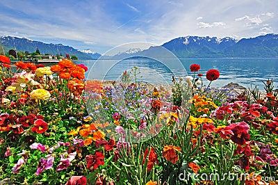 Flowers in swiss Alps