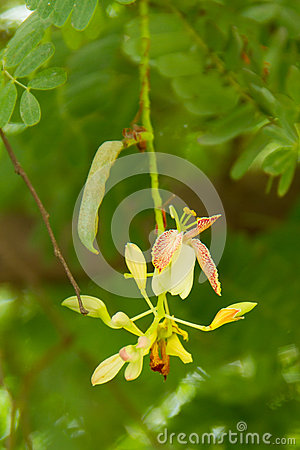 Flowers And Tamarind Stock Image - Image: 32787031