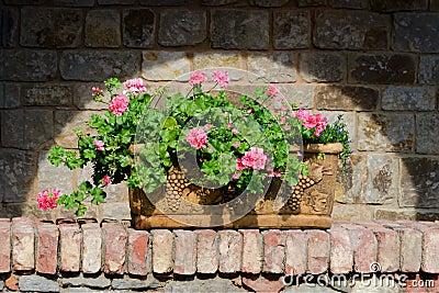 Flowers in  terracotta box