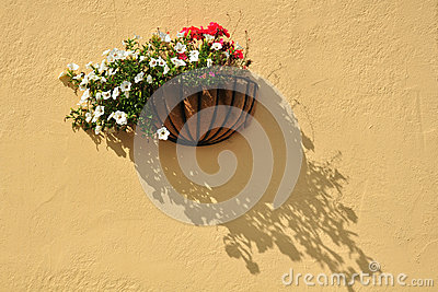 Flowers on textured wall