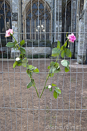 Flowers tied onto temporary fencing Editorial Photo