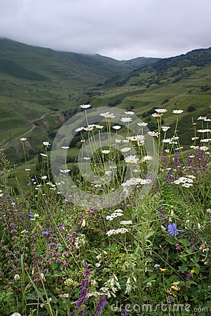 Flowers To Mountains Stock Images - Image: 6218574