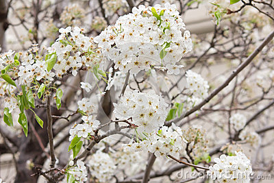 Flowers on tree