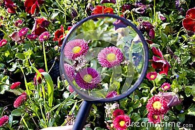 Flowers under magnifier
