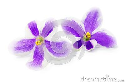 Flowers of violet