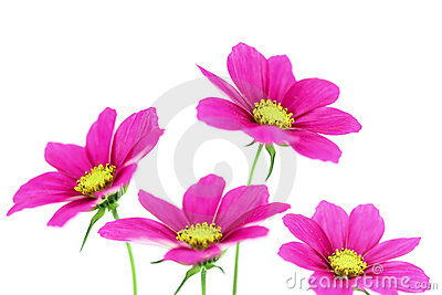 Flowers with white background