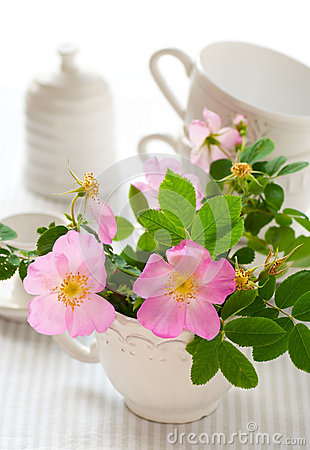 Flowers of wild rose in the cup