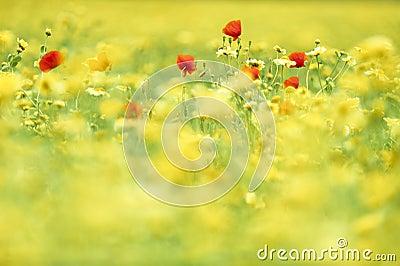 Flowers in a wild summer field