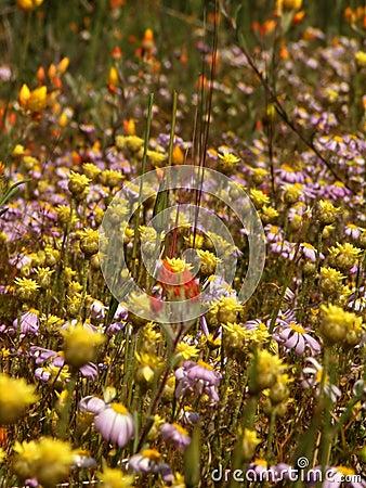 Flowers - Wildflowers