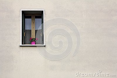 Flowers on the window