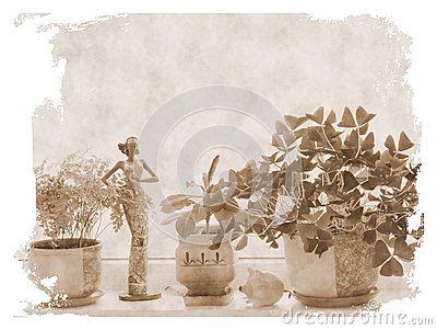 Flowers at windowsill