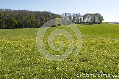 Flowery meadow in Hohenlohe
