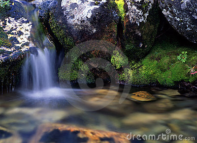 Flowing water in forest