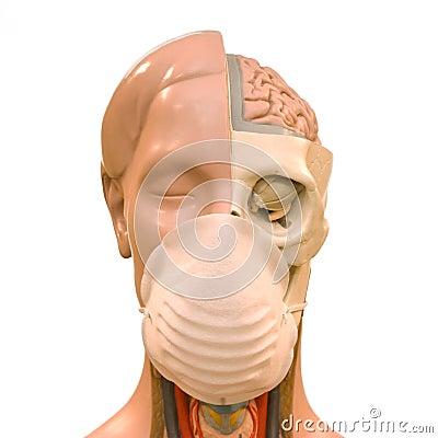 Flu virus danger concept