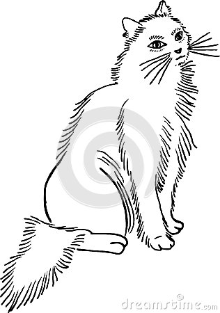 Fluffy Cat Royalty Free Stock Photography Image 30429447