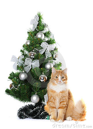 Fluffy cat under Cristmas tree isolated on white