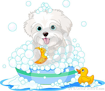 Fluffy dog having a bath