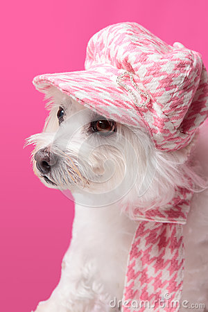 Fluffy dog wearing winter fashion