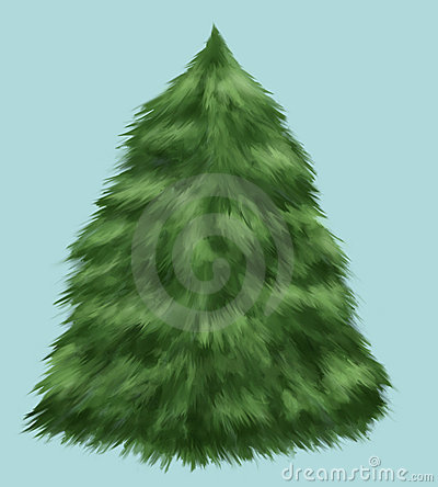 Fluffy fir tree isolated