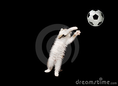 Fluffy goalkeeper