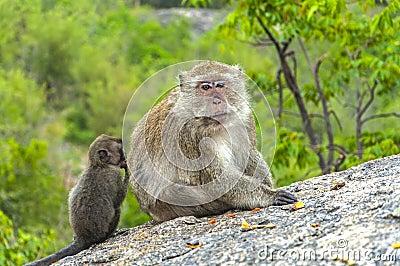Fluffy monkey