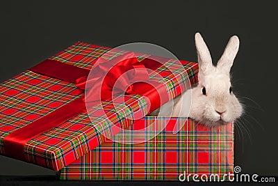 Fluffy rabbit in giftbox