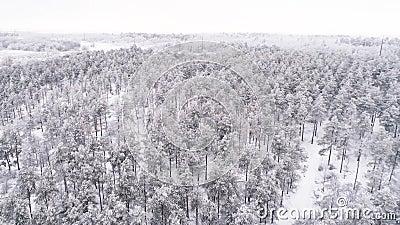 Flug über einen schneebedeckten Pinienwald im Winter stock footage