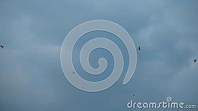 Flug von Schwungvögeln Möwen am Himmel vor wunderschönen blauen Orangenwolken stock footage