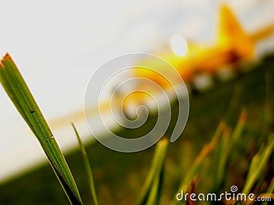 Flugzeug auf einer Graslaufbahn