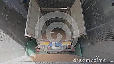Flujo de granos entrando en el bunker del ascensor cuando se descarga un camión para la posterior venta о п и с а н и е metrajes