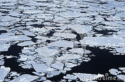 Flusso del ghiaccio di mare di Weddel dell Antartide
