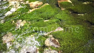 Flusso fresco del fiume archivi video