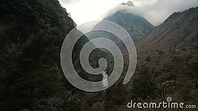 Flusswald auf dem Berg stock video footage