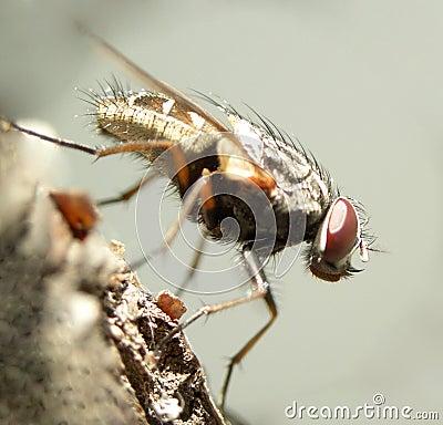 Fly......(7)