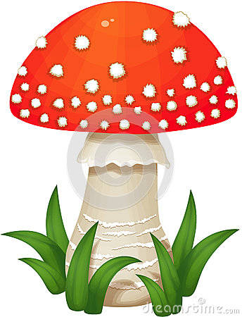 Free Fly Agaric Mushroom Royalty Free Stock Photos - 45828978