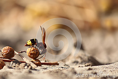 Fly ant