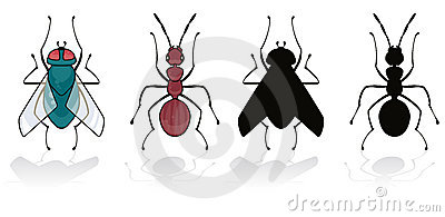 Fly and ant