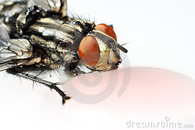 Fly drink