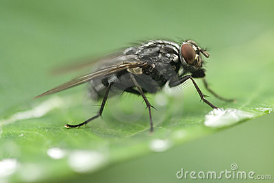 Fly drinking water