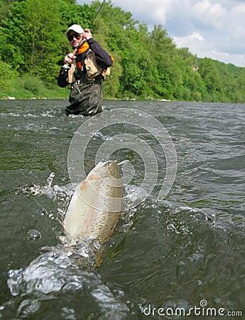 Free Fly Fishing Stock Photo - 8163810