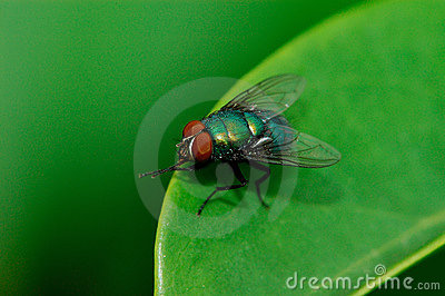 A fly on the leaf