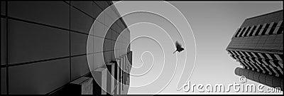 Fly my bird