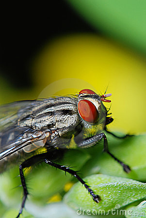 Free Fly On The Green Royalty Free Stock Image - 5000466