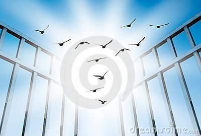Fly overcome the difficult gate