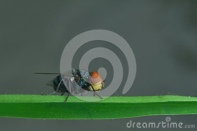 The fly is perching on the green leaf