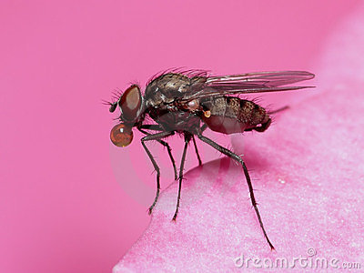 Fly in pink